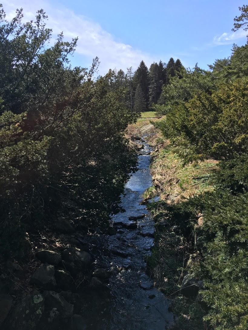 arnold-arboretum-bridge-view.JPG