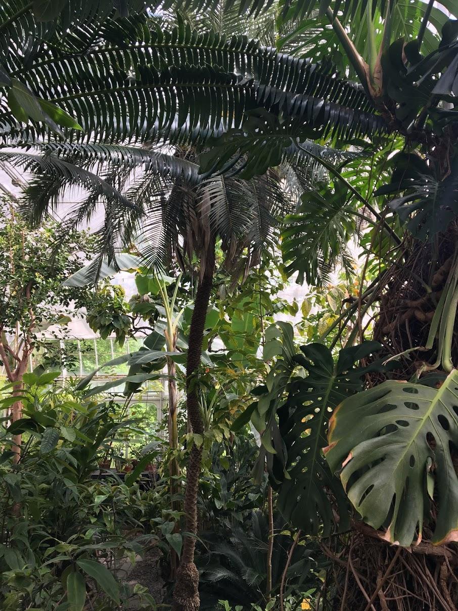 smith-college-botanic-garden-inside.JPG
