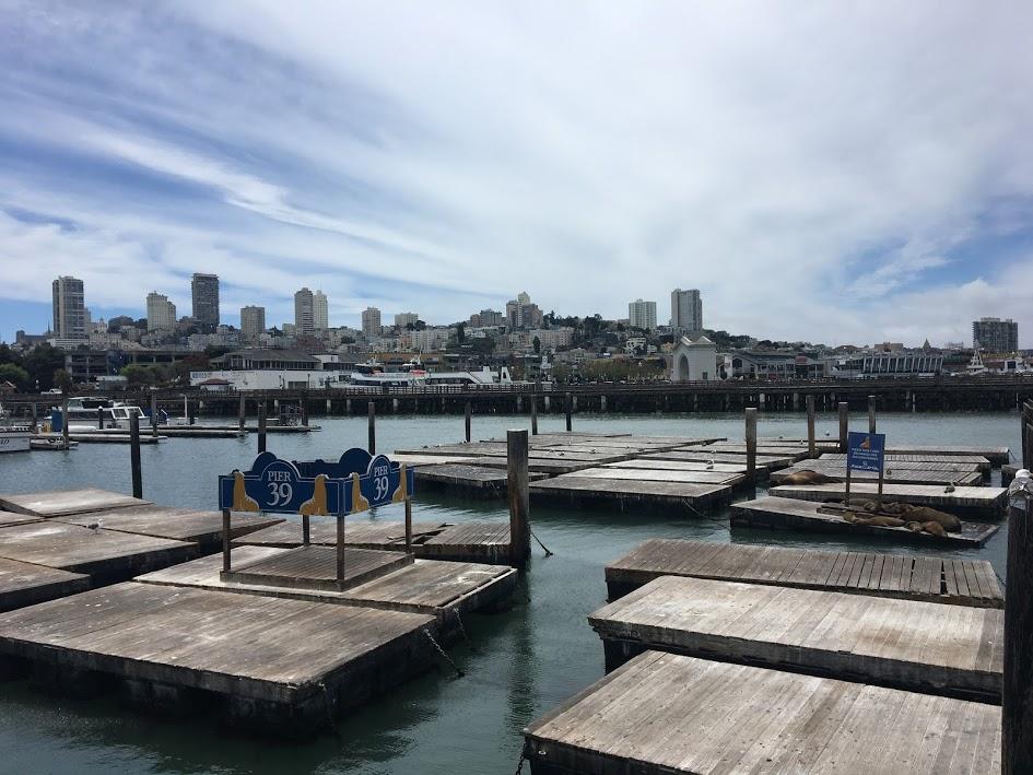 Pier 39 is lacking sea lions