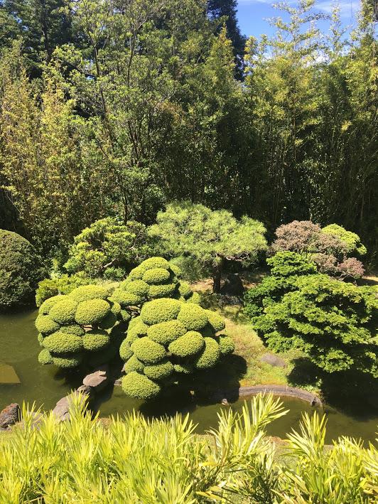 Bumpy trees at the Japanese Tea Garden