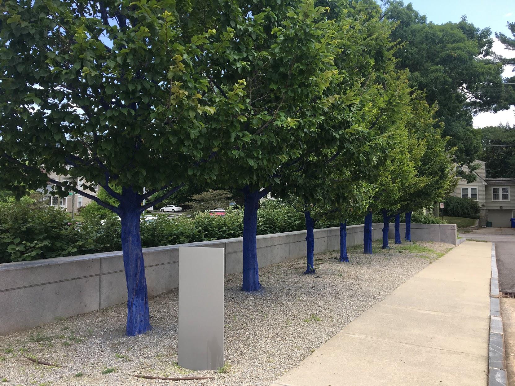 Blue trees!