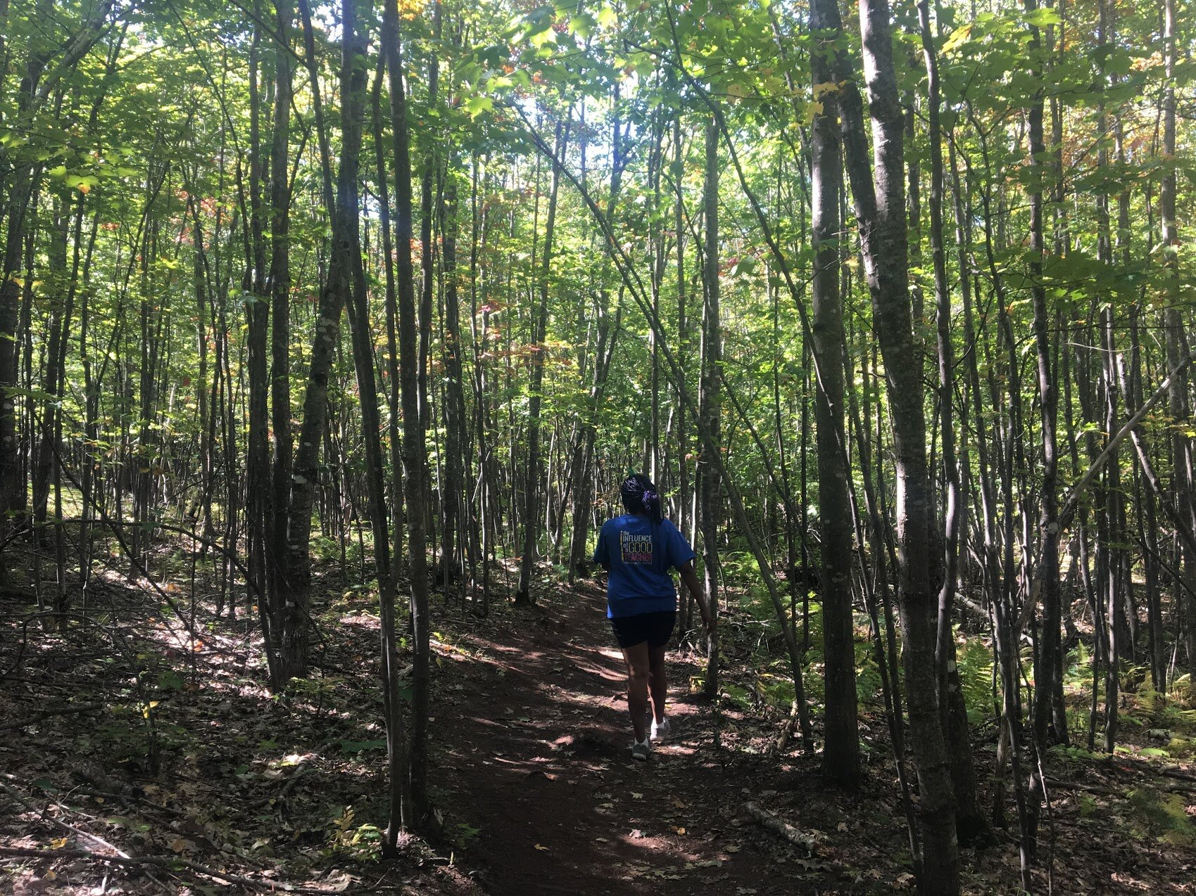 blue-job-mountain-birch-trees.JPG