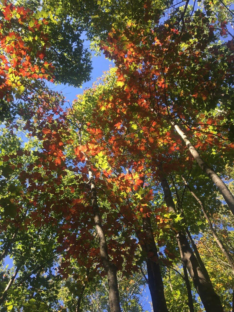 blue-job-mountain-autumn-leaves.JPG