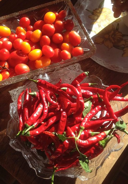 tomatoes and chillies.jpg