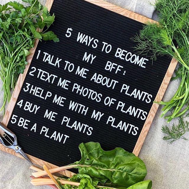 🌿 Happy Friday, plant people! 🌿⠀ ⠀ It's harvest day! ⠀ ⠀ When you're collecting plant material for medicine and sustenance, please remember to offer gratitude to the plant and Earth, only take what you need, be mindful of the bugs and bees, and avoid harvesting in the hottest part of the day. The harvesting process, when done without care, can cause stress on the plants in your garden, so taking extra time to be present and observe the plant's response to your actions encourages more healthy growth 💚 ⠀ #harvest #wildcraft #homegrown #handmade #herbalism #plantlady #earthsteward #organic #medicinewoman #holistichealth #beautifulearth #medicine #plantbased #bethankful #abundance #gardengoodness #setavida #mushlove #gardenday #happyhealthy