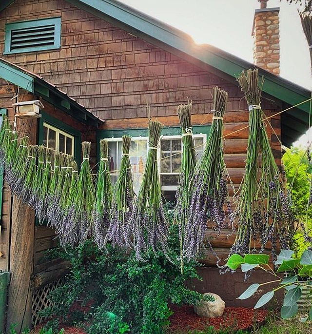 Lavender Dream 💜⠀ ⠀ Loving this scene, @rootedapothecary ⠀ ⠀ What herbs do you have drying today? ⠀ ⠀ #lavender #herbalism #farmhouse #harvest #abundance #plantallies #apothecary #goals #simplelife #happyplace #mountainlife #herbalmedicine #happyhealthy #plantlady  #mushlove #flowers