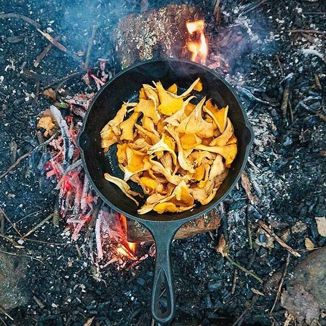 Nothing says fall like Chantrelles over the campfire. Mushroom season is upon us! ⠀ ⠀ What foraged finds are you most looking forward to this year?⠀ ⠀ 📸: @sonofa_bear ⠀ ⠀ #mushroomhunting #fall #foraging #wildfood #campfire #chantrelles #fungi #mushlove