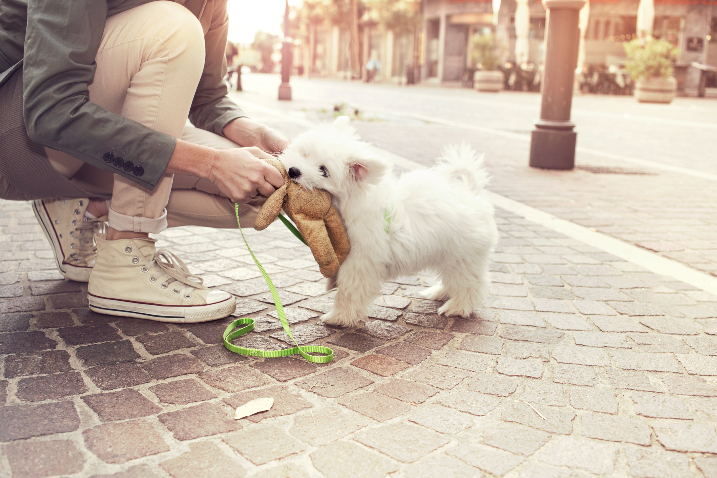 A puppy and guardian just hanging out on a street corner, playing with a toy and watching the world go by. Photo credit: Cristina Conti, Adobe Stock