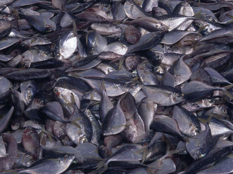 overfishing-overviewHI_107449.jpg