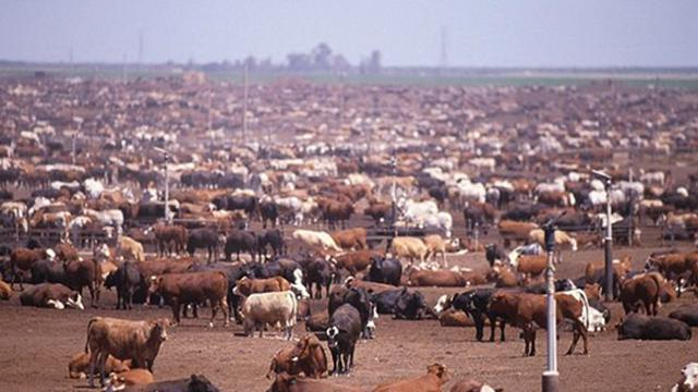 Environmental Damage from Animal Agriculture