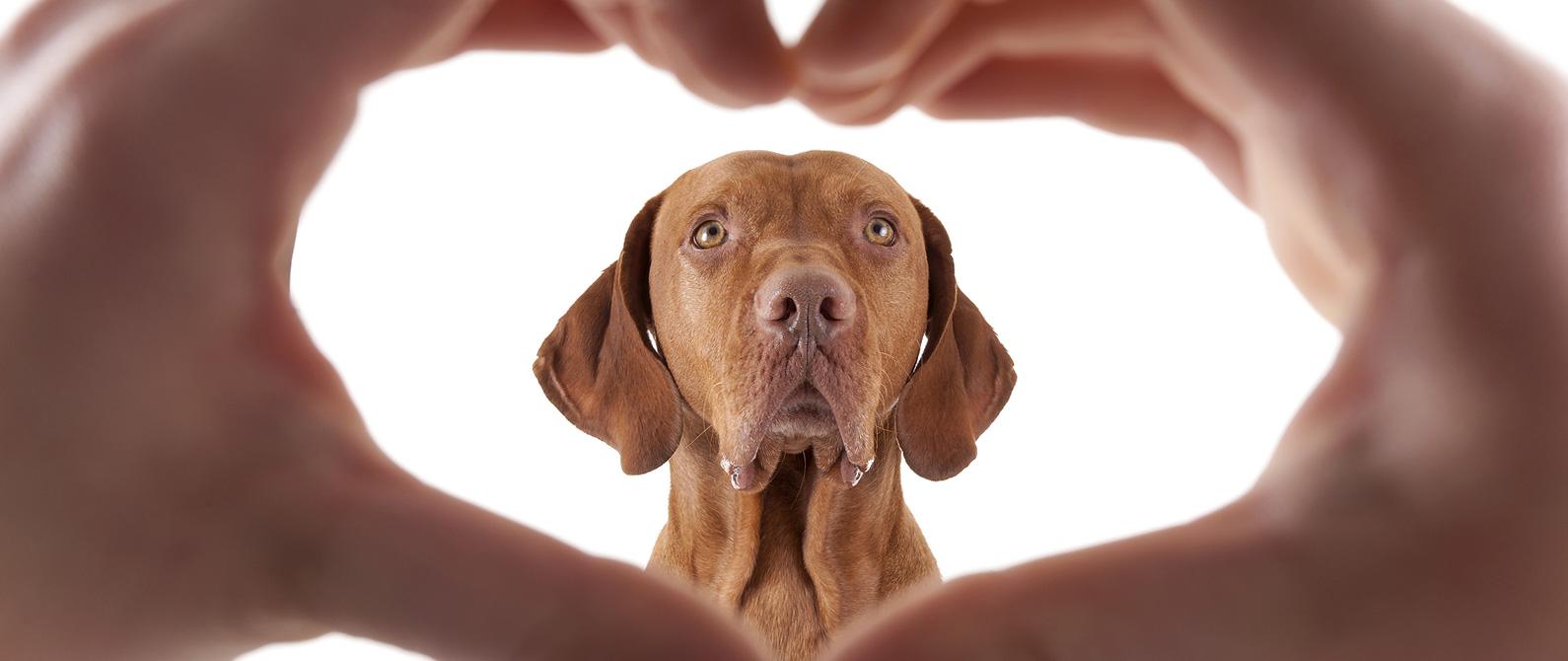 love pets.jpg