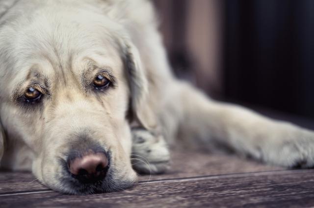 old dog sad 3.jpg