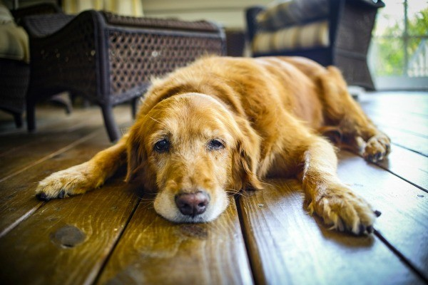 old dog sad 2.jpg