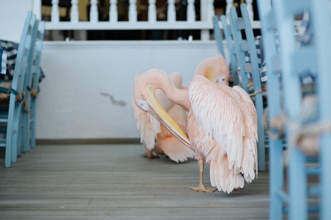 cyprus-wedding-photographer-4.JPG
