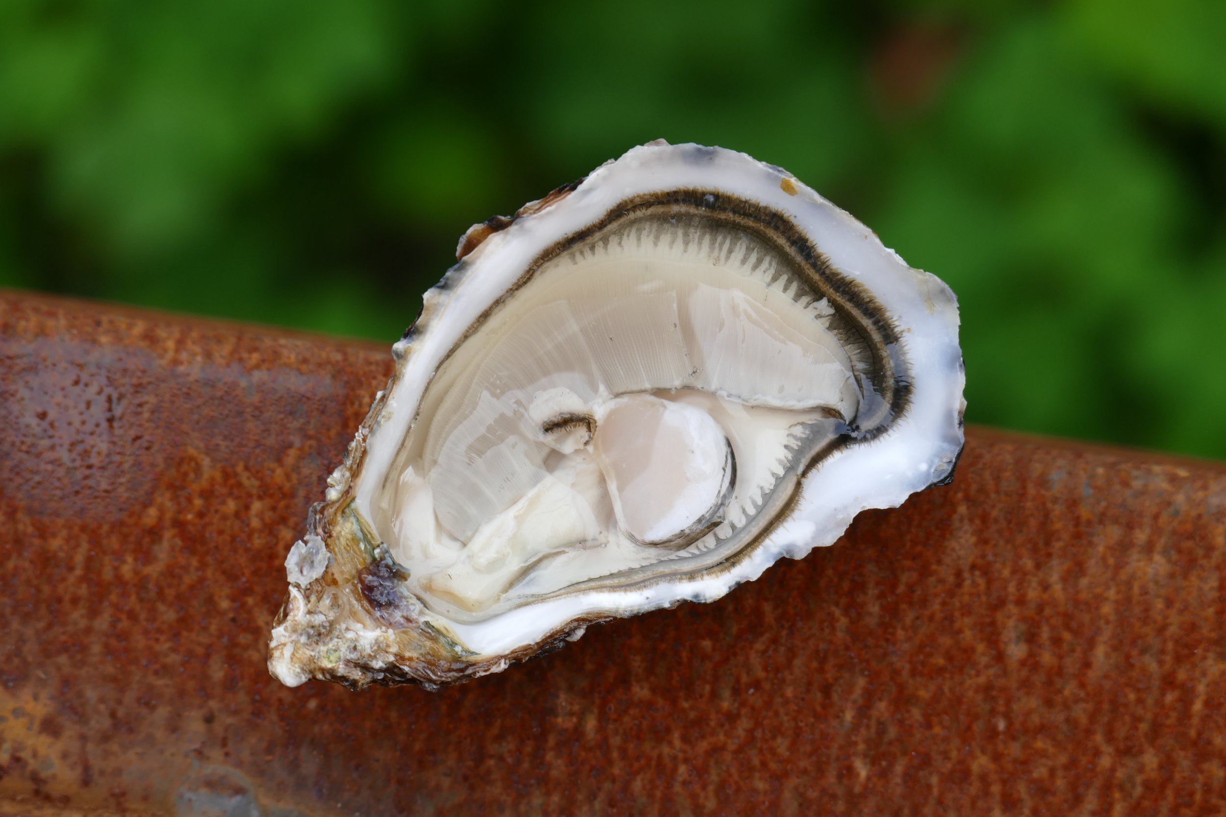 oester couvert leuven michelin.JPG