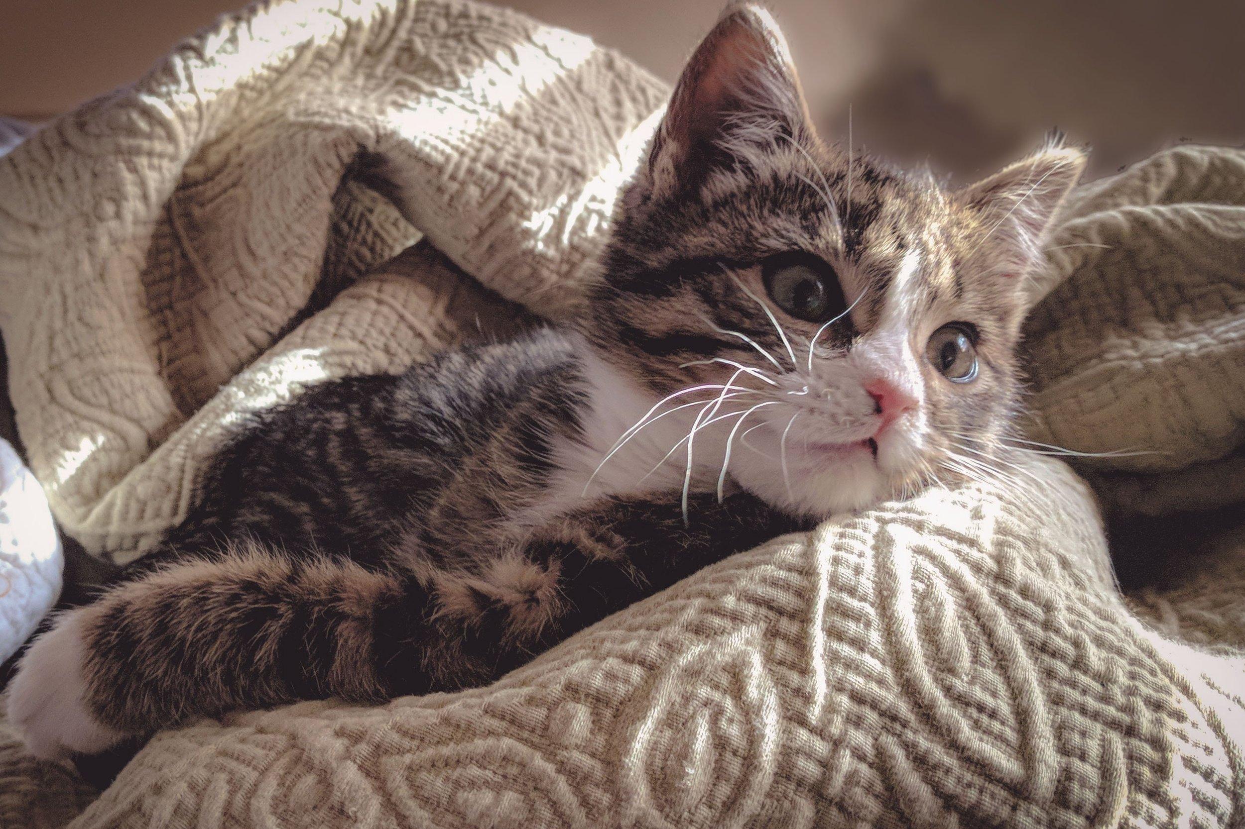 adorable-animal-baby-731553.jpg