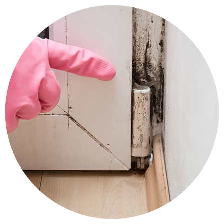 DC-Restoration-Services-Mould-Damage.jpg