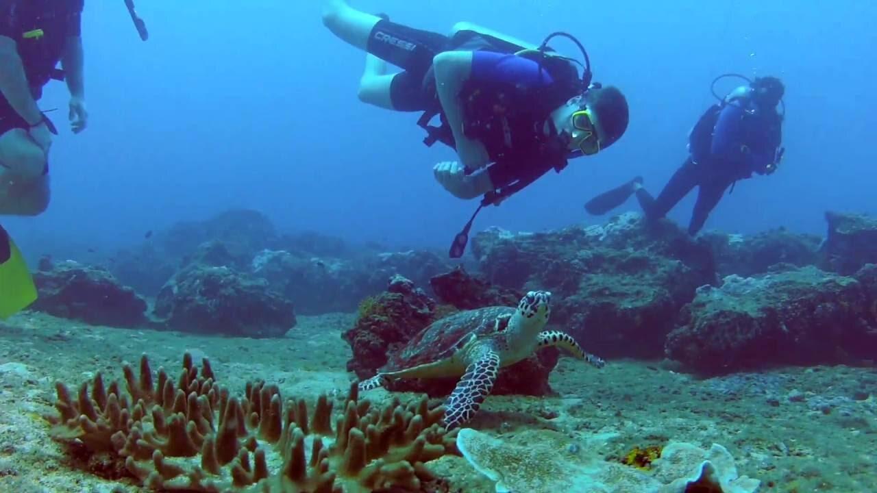 scuba-diving-turtle-kalpitiya.jpg