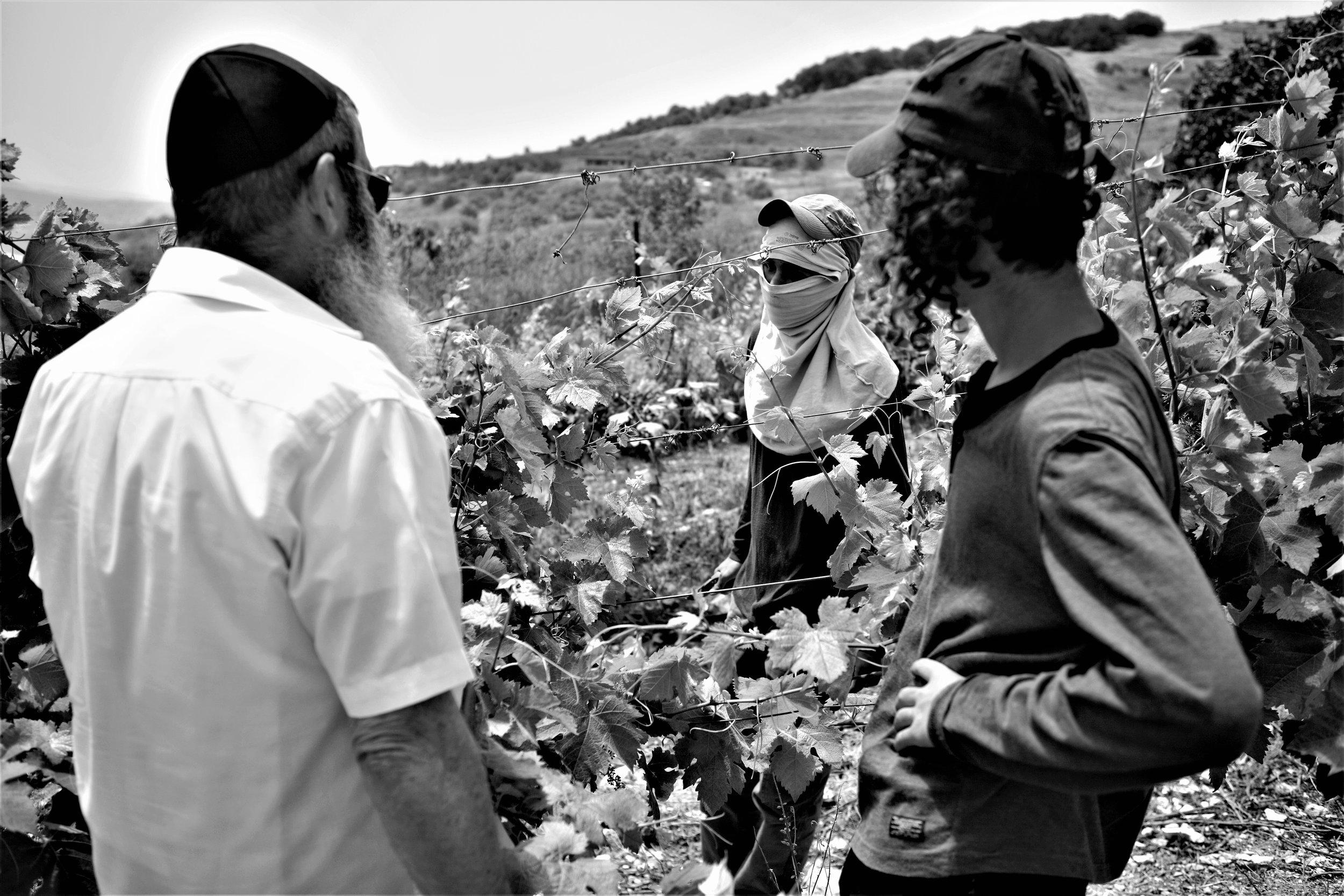 Moshe Kimches Trauben wachsen unweit der Stadt Nablus auf einem einem eingezäunten Feld – hier ist er im Gespräch mit Rebarbeitern.