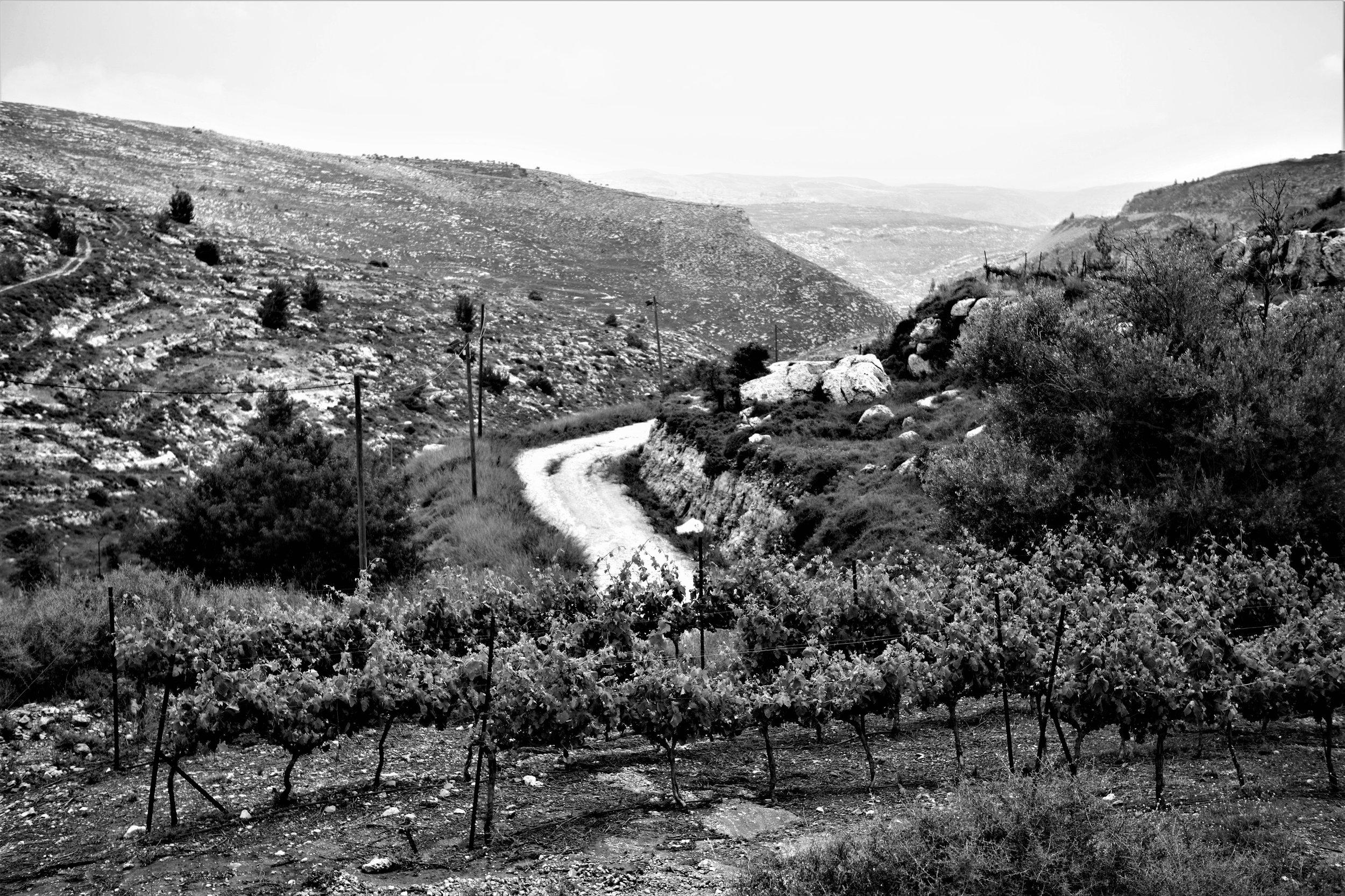 Blick von den Rebbergen der Psagot Winery auf die wünstenhafte, karge Landschaft.