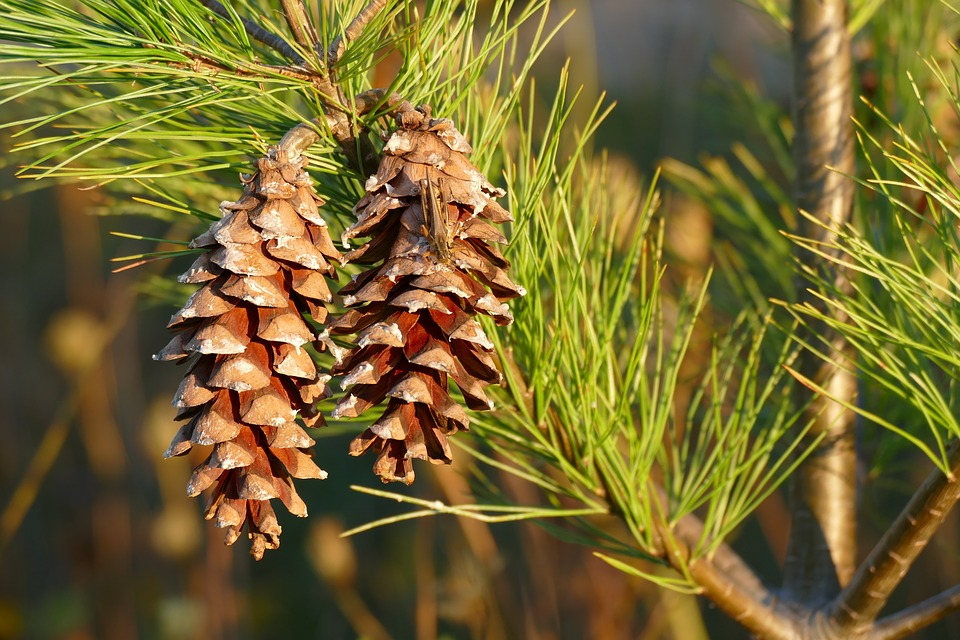 Global Pine Chemicals Market — Compare Industry Reports