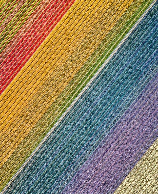 Thanks to the amazing organiser @suus_san ,3 Jiriki Seitai workshops are coming to the beautiful tulip land - Netherlands this weekend 😊 • Thank you so much @suus_san , and @bindiamersfoort and @yogadreamsnl . I am so excited to visit your city to share this practice. Here's the Jiriki Seitai description in Dutch, which is the 3rd languages that Jiriki was translated into 🇯🇵 🇬🇧 🇪🇸 🇳🇱 ❤️ Jiriki is een Japanse zelfhelende bewegingstherapie, een restoratieve, ontspannende en genezende oefening, die je helpt je lichaam opnieuw uit te lijnen. Het combineert verschillende elementen van Shiatsu-massage, chiropractie, yoga en meditatie. Het is ontwikkeld door Yu Yagami, een chiropractor en acupuncturist die zelf 10 jaar in een yoga ashram woonde. Jiriki is de Japans, Boeddhistische term voor zelf-kracht, het vermogen om bevrijding en verlichting te bereiken.  Jiriki's streven is om te leren zelf de meeste chronische aandoeningen en pijnen te kunnen genezen of om deze preventief aan te pakken. Door middel van op yoga gebaseerde oefeningen worden acupressuurpunten gestimuleerd en leer je spierspanningen los te laten. Hierbij wordt ook gewerkt met een stoffen band.  Het natuurlijke genezingsvermogen van je lichaam wordt vergroot net zoals de weerstand en flexibiliteit.  Het lichaam drijft giftige stoffen makkelijker af en organen worden gemasseerd. Jiriki heeft een holistische benadering in plaats van je alleen te richten op de aandoening. Het regelmatig toepassen van Jiriki heeft een heel positief effect op lichaam, geest en welzijn.  Momenteel zijn er 500 leraren opgeleid in het lesgeven van Jiriki Seitai, alle werkzaam in Japan en in het Japans. Op één na, haar naam is Marié Yagami, de dochter van Yu Yagami, de grondlegger van Jiriki en zij komt naar Nederland om exclusief een paar workshops te geven. De eerste ooit gegeven in Nederland! • 来週はオランダの3つのヨガスタジオで自力整体をシェアしに行きます。英語、スペイン語に次いでオランダ語に説明を訳して貰いました。とても楽しみです😊 #jirikiseitai#jirikiflow#自力整体 #ヨガ #インヨガ#movingmeditation #自力整体の