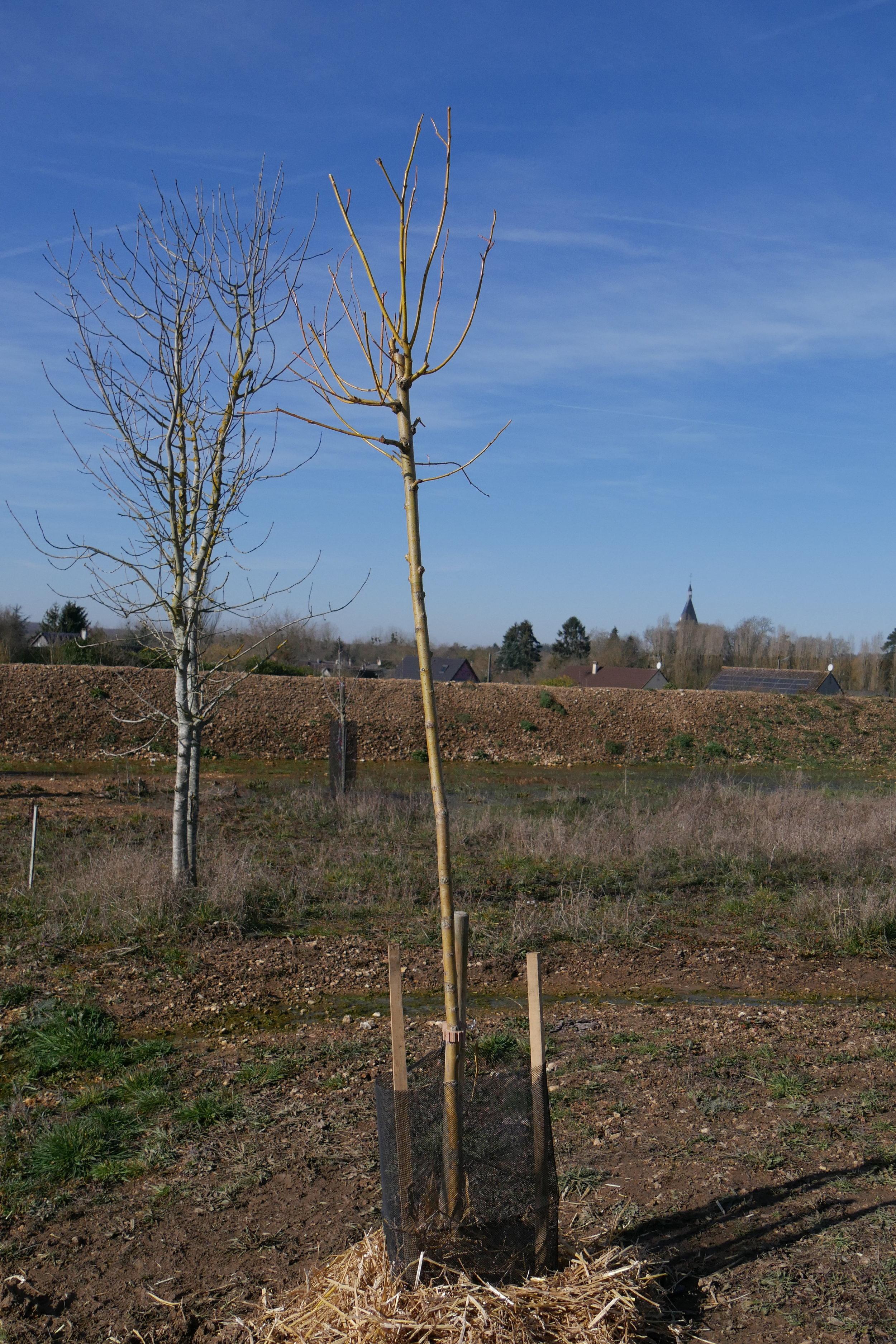 Il tuo albero è stato piantato il 24 febbraio