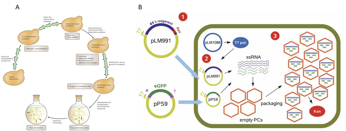 Figure 1  Examples of  In vivo  production of small molecule (artemisinic acid) and double-stranded RNA (1,3)