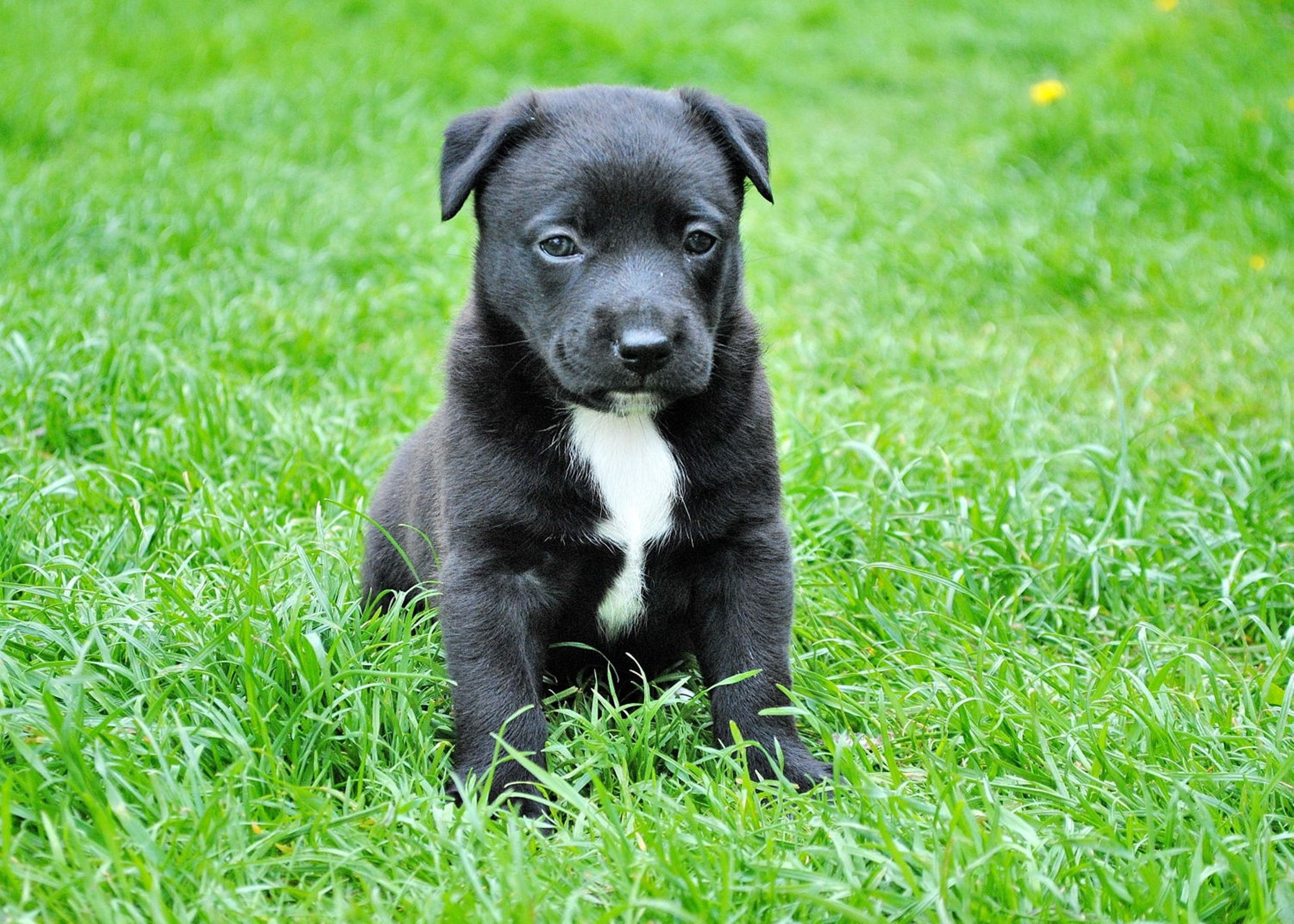 animal-cute-dog-59965.jpg