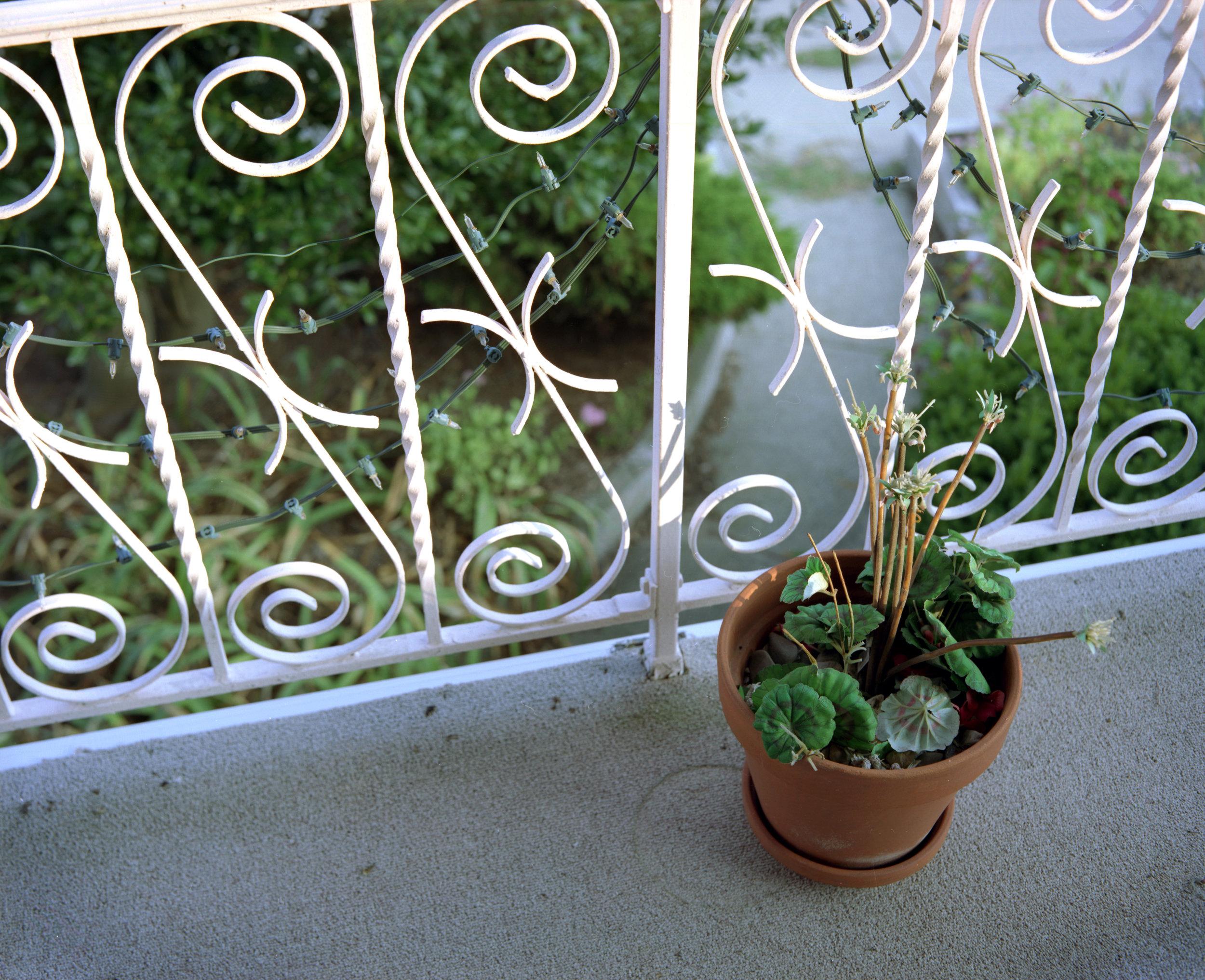 08_Plastic Plant Porch.jpg