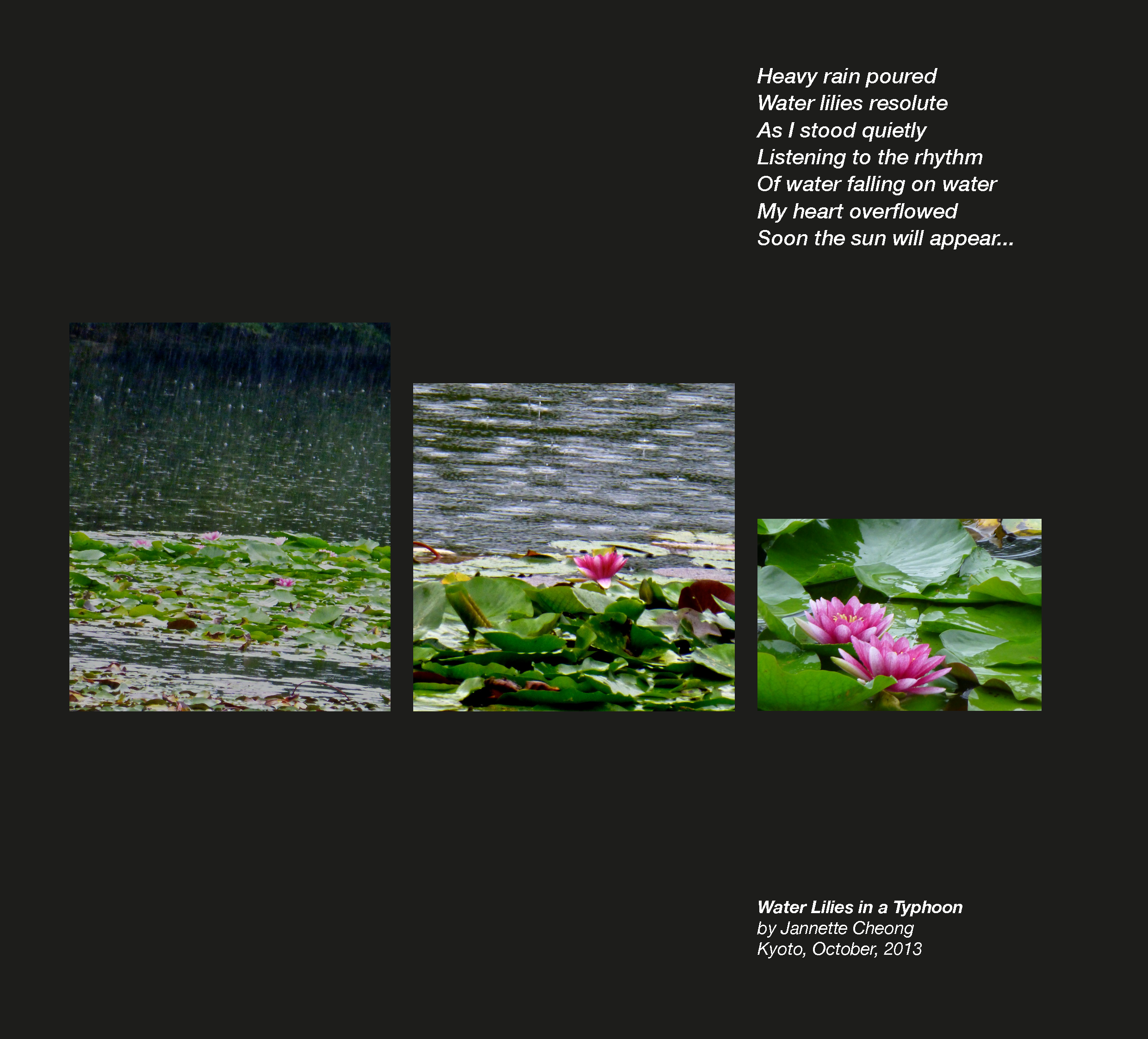 Water lilies in a Typhoon4.png