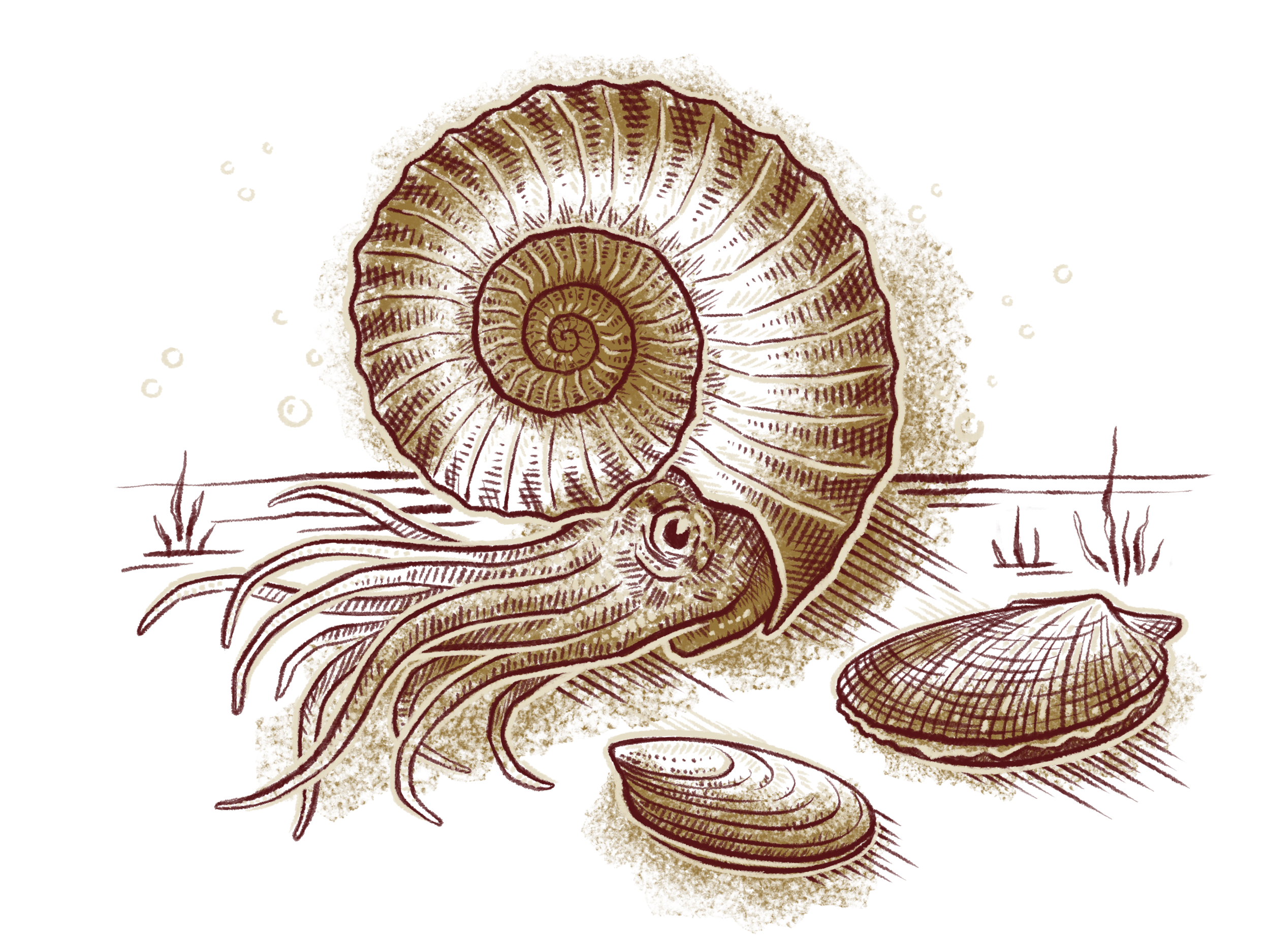If you casted out a fishing line into the Triassic seas, you'd probably catch a species of ammonite, says Ritterbush. While this abundant group survived into the Cretaceous, the ammonites were hit hard during the End Triassic mass extinction along with other shelled marine animals. Illustration by Franz Anthony