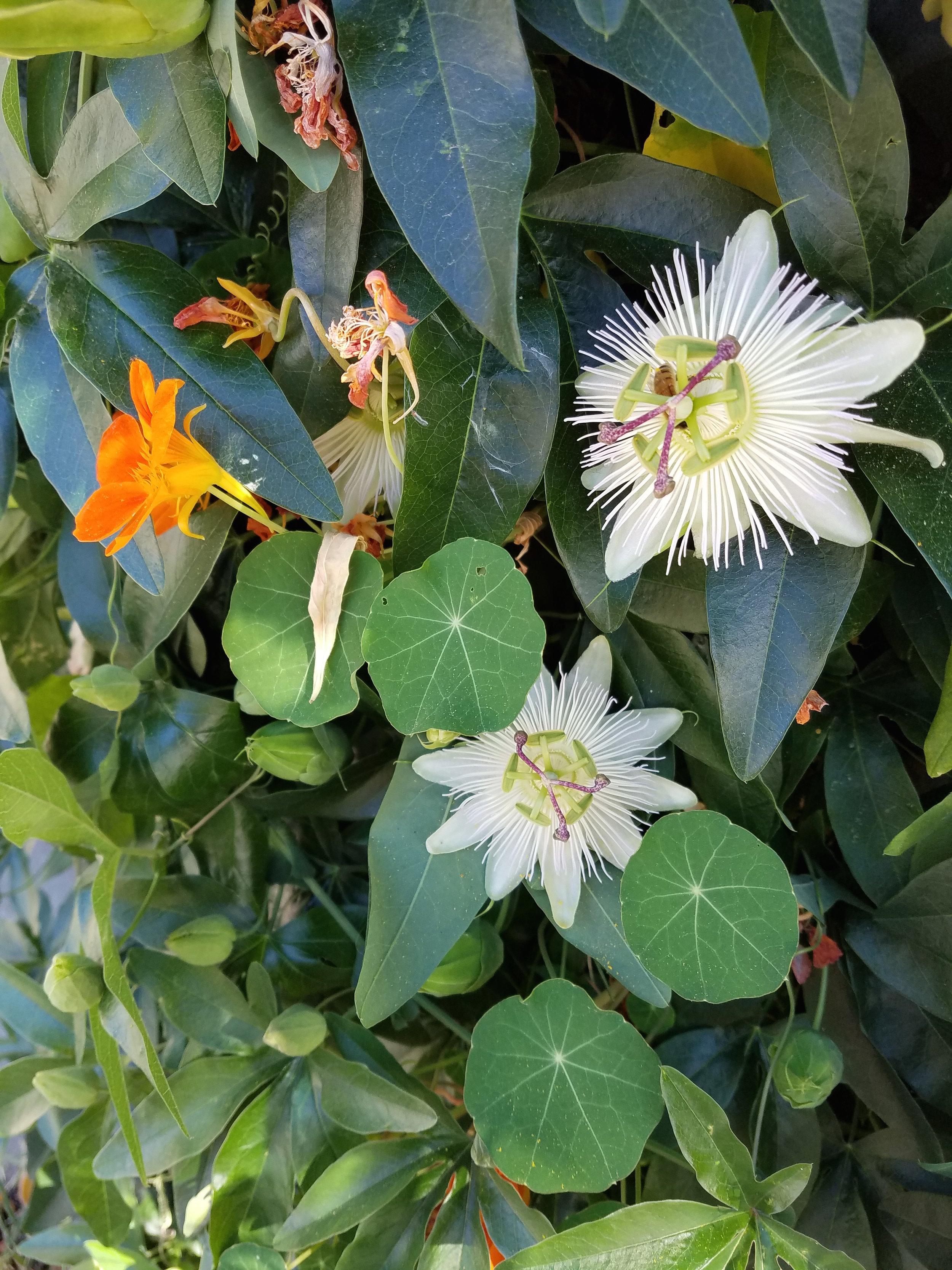Energetic herbalism. -