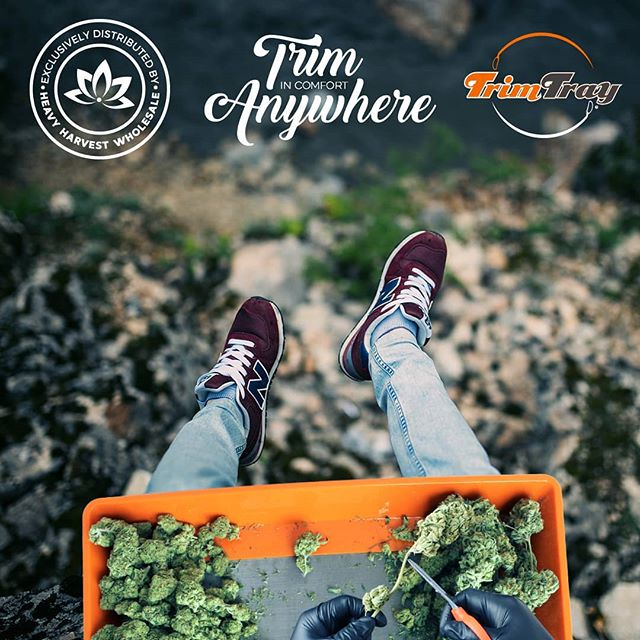 Whats up guys! Trim Trays are back in stock! Want to carry Trim Trays in your store? Hit up @heavyharvest wholesale.  #cultivation #thc #plants #hydroponics #girl #organicgardening #organics #flowers #growyourown #organicgrower #growers #greenhouse #monstergardens #homegrown #greenthumb #trim #design #grow #420life #cultivate #kief #love #cannabiscommunity #gardening #instagood #trimtray #420