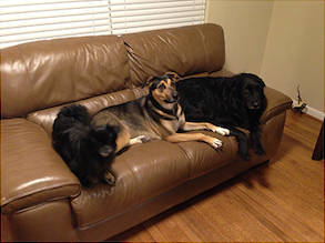 Sonny, Sally & Sammy; these dogs are NOT allowed on the couch. -