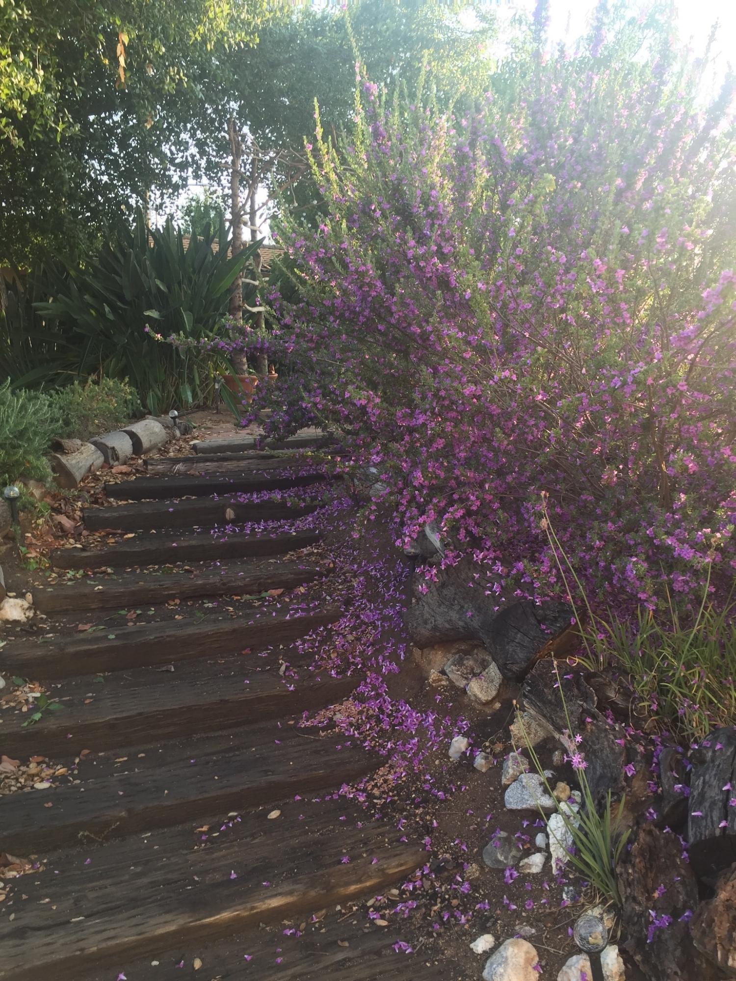Garden path to cottage patio