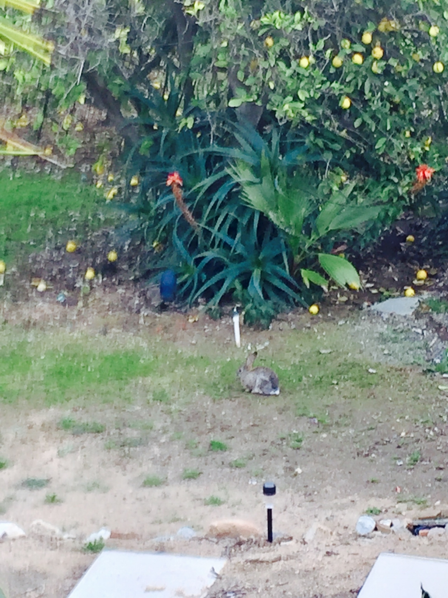 Can you see the rabbit?