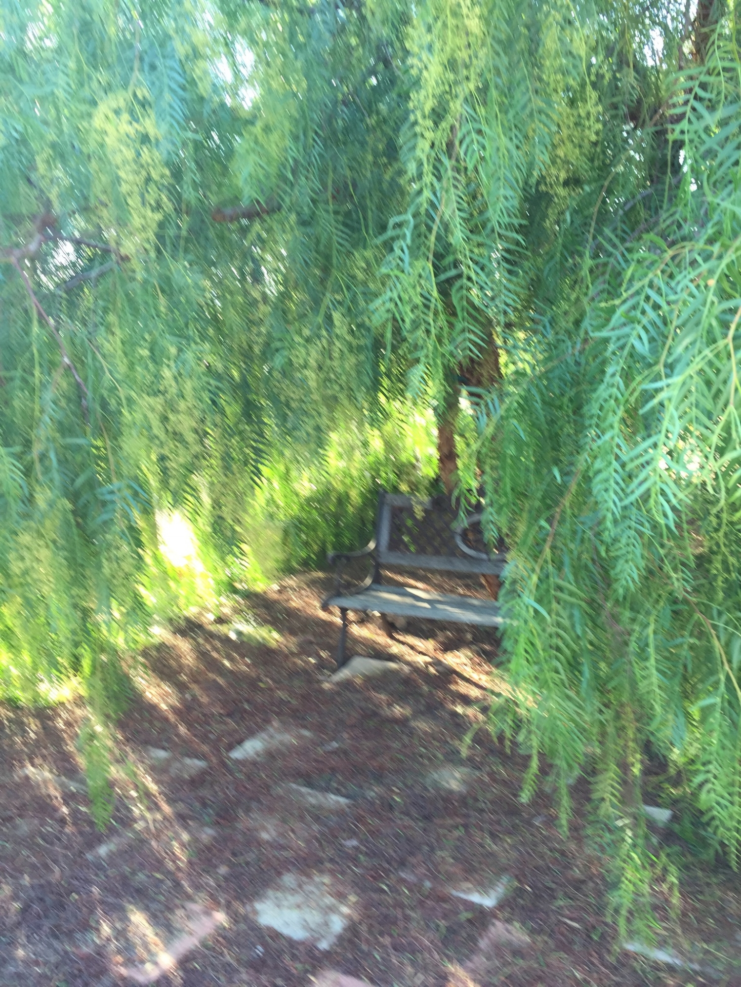 Have a seat under the Pepper Tree