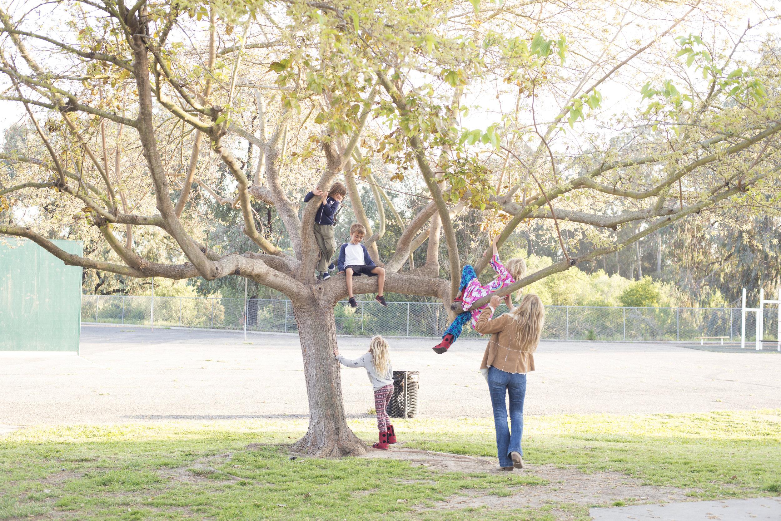 Waldorf children in tree