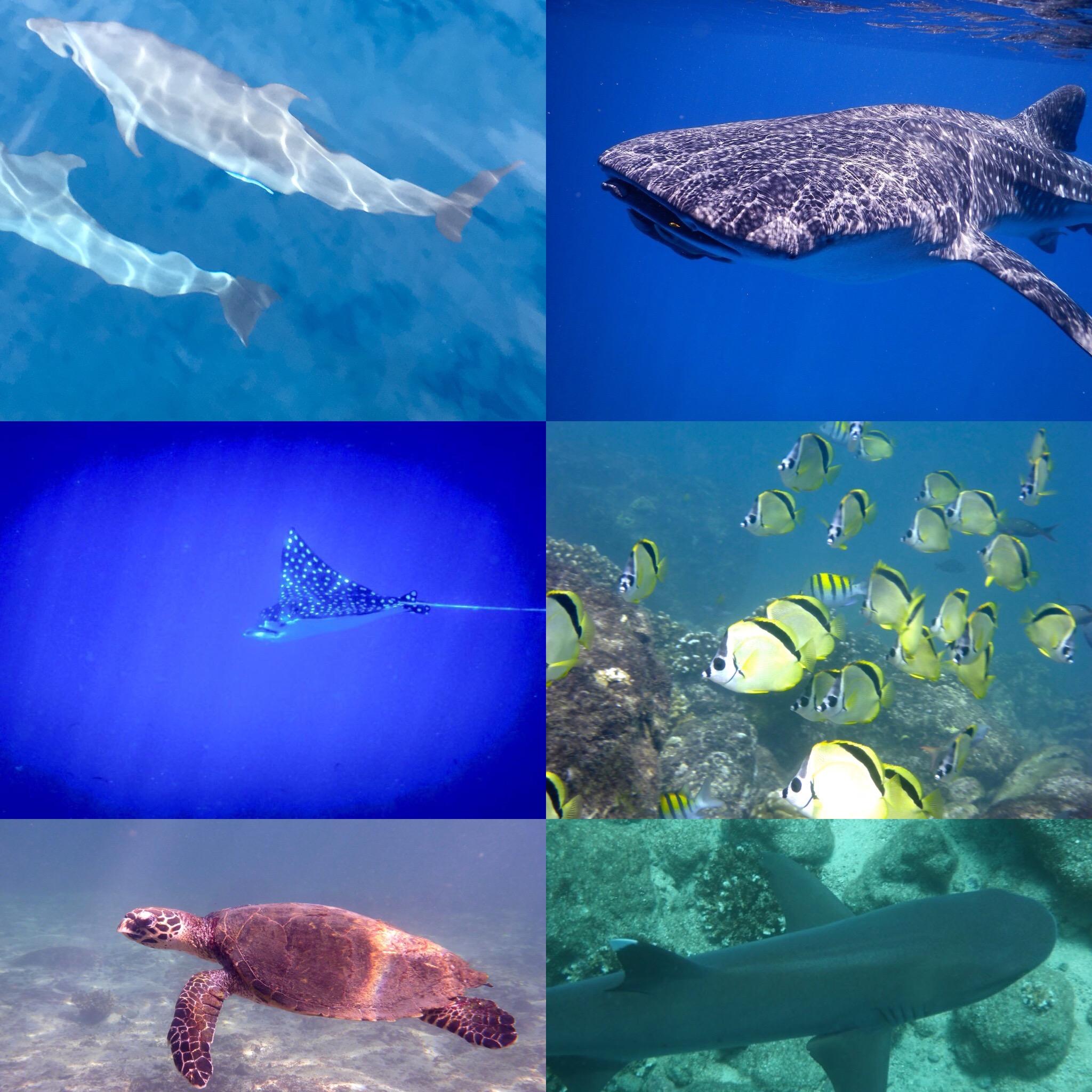 Coiba Sea Life (1).jpg