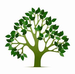 tree of life.jpg