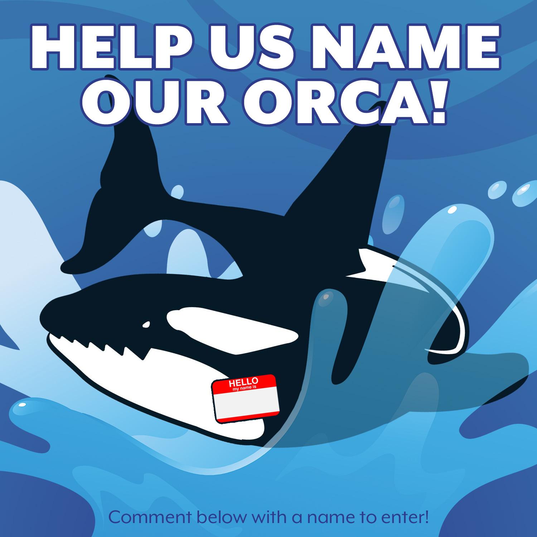 name our orca.jpg