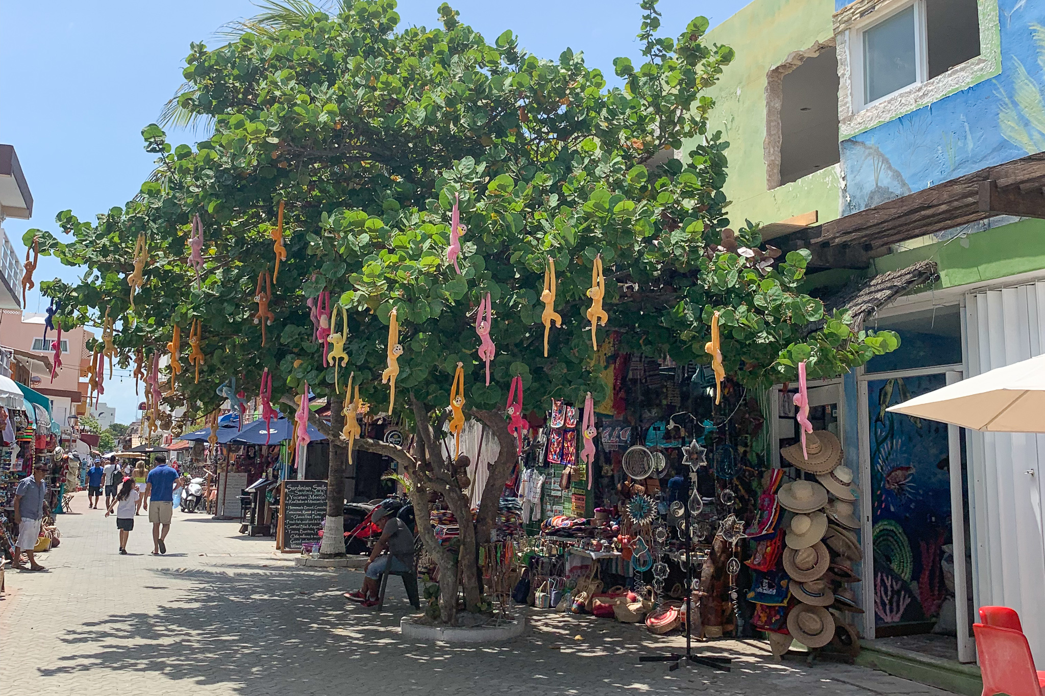 The streets of Isla Mujeres are adorable, and this tree filled with monkeys is just one cute moment.