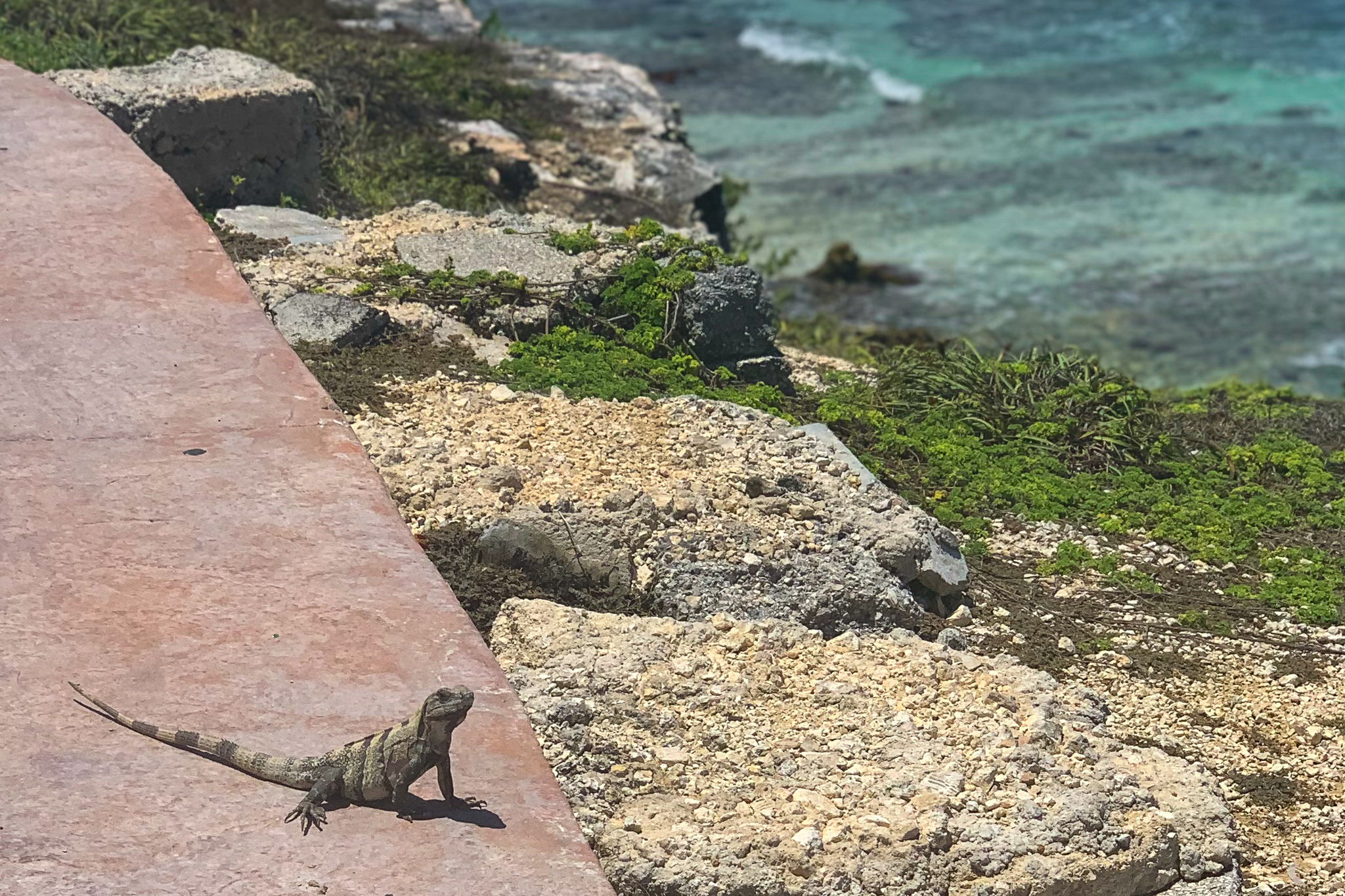 Nature is everywhere in Isla Mujeres.