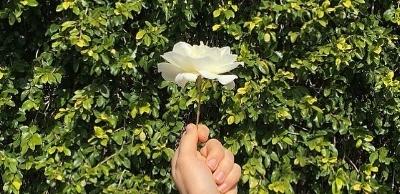 Flower in LA