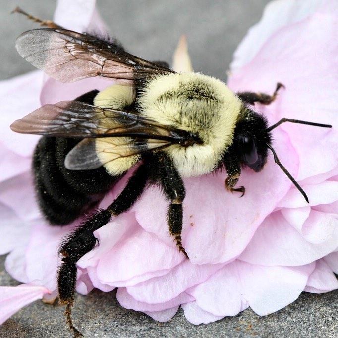FDV MACRO BEE 2.jpg