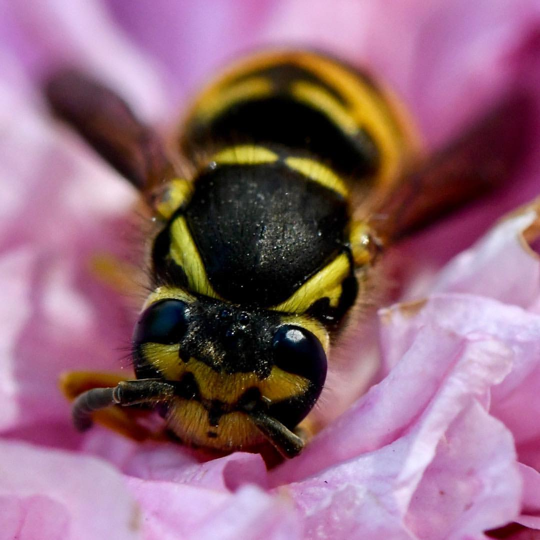 FDV MACRO BEE.jpeg