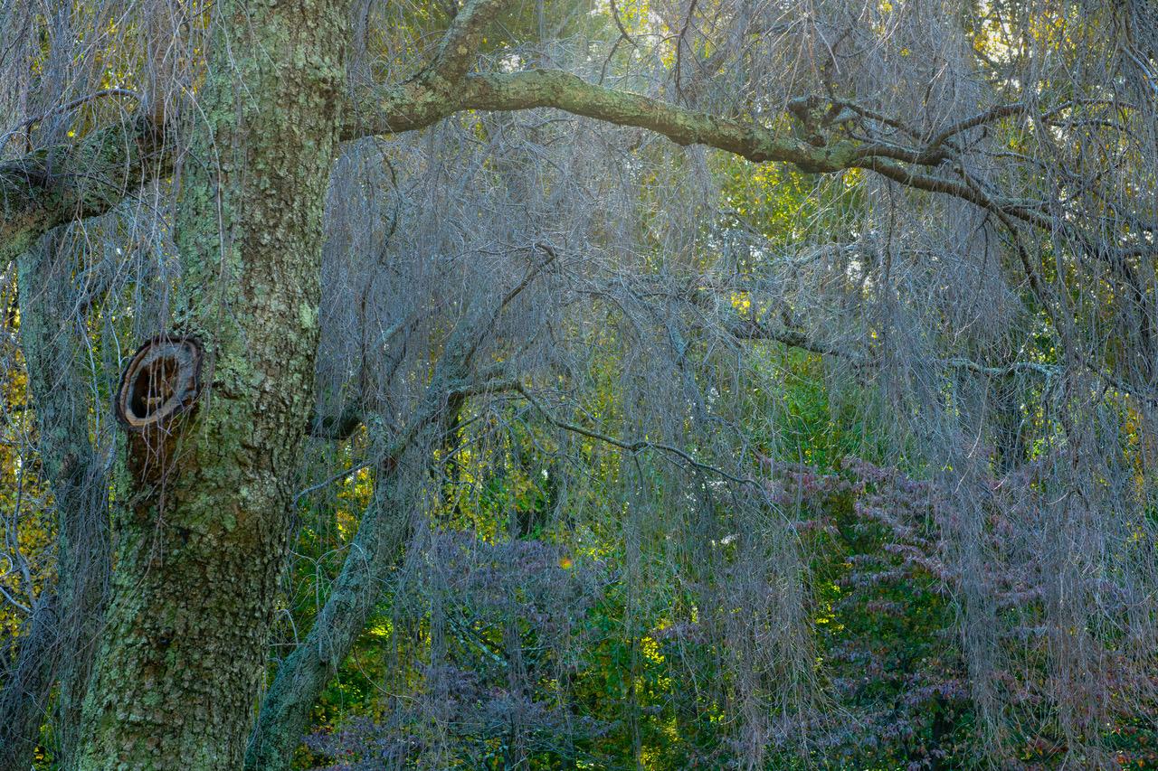 Willows9.jpeg