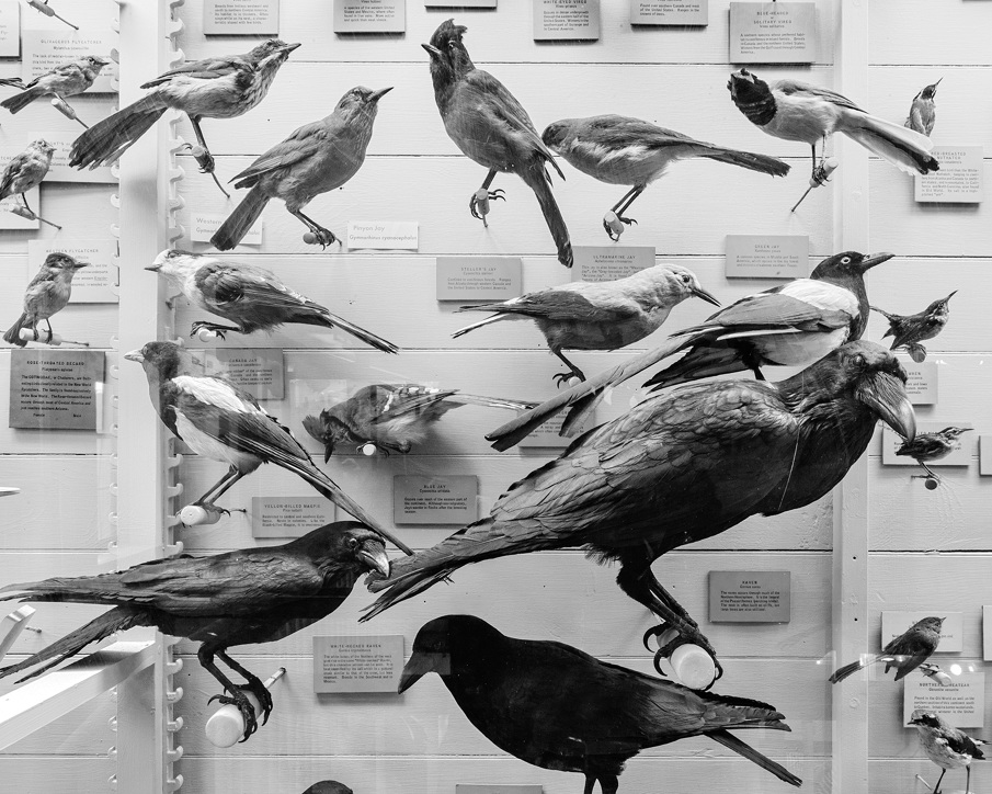 Matthew Gamber, Blue Birds Exhibit, Gelatin silver print, 2010 from the series Any Color You Like.