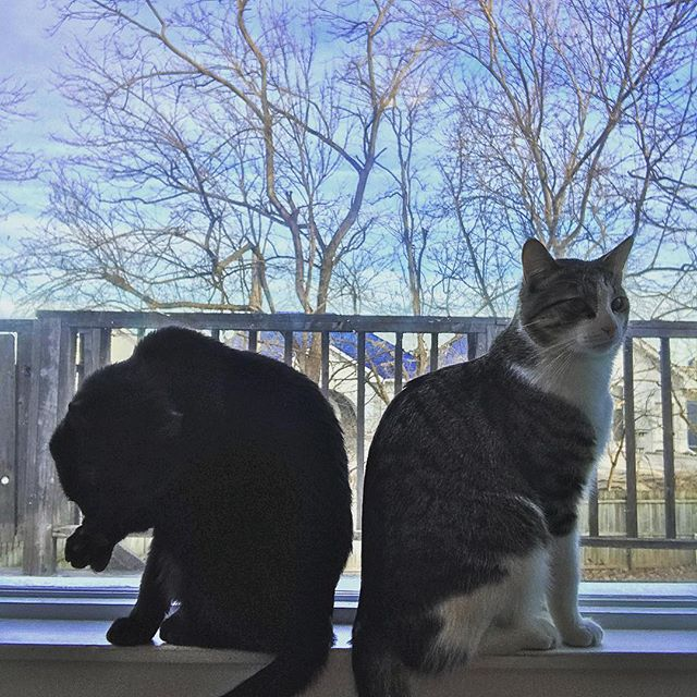 Cat brothers. #perseus #rubin #catbrothers @whynottim
